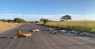 LockDown Afrika Selatan