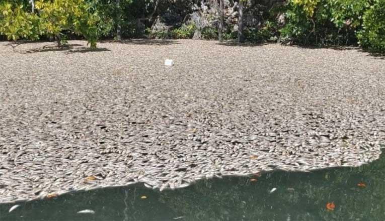 Ikan Mati di Raja Ampat