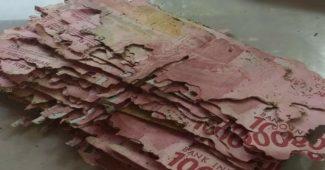 Uang Di Makan Rayap Rp 15 Juta Ternyata Bisa Diganti Di Bank Indonesia